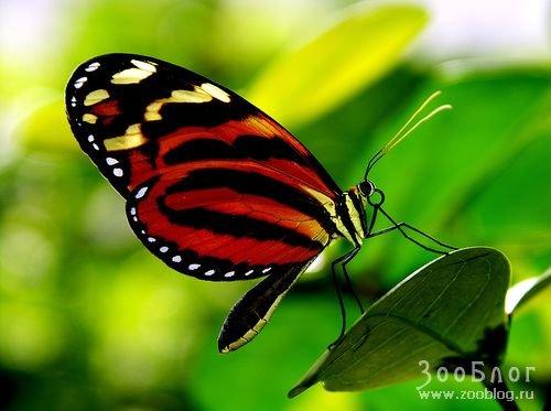 Бабочки 10 фото