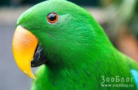 Красивые попугайчики (15 фото) .