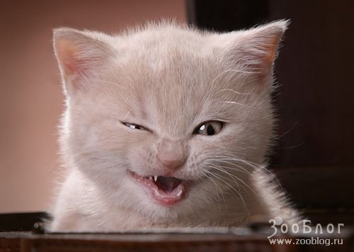 http://www.zooblog.ru/uploads/posts/2008-04/1208738084_funny-cats-01.jpg