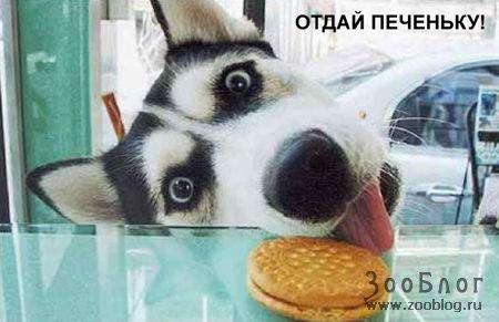 Смешные собачки (12 фото)
