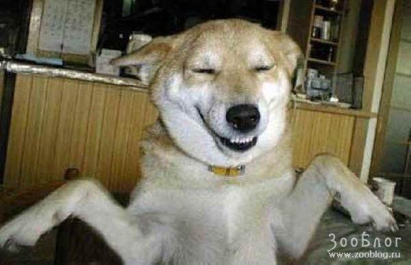 Смешные собачки 12 фото