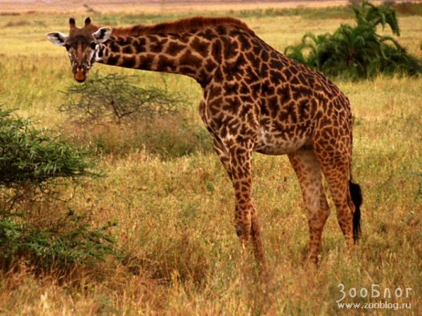 http://www.zooblog.ru/uploads/posts/2008-04/1209137881_8.jpg