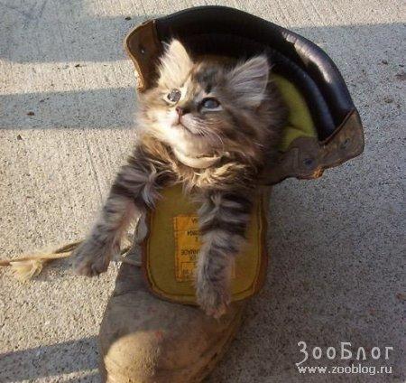 Забавные кошки (8 фото)