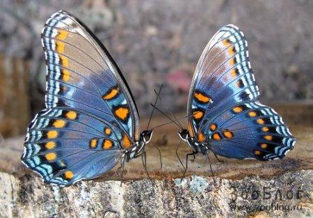 Бабочки (10 фото)