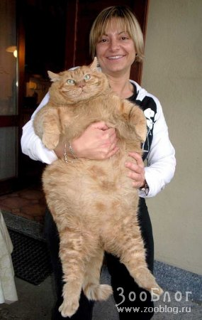 Рыжый толстяк