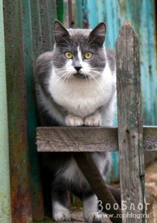 Забавные кошки (7 фото)
