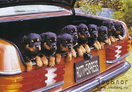 Посмеемся вместе 1208986891_funny-dogs-04