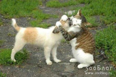 Кошки и Собаки (14 фото)