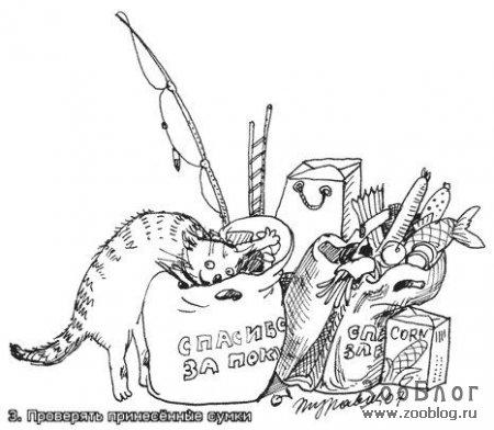 Кошачье поведение (18 фото)