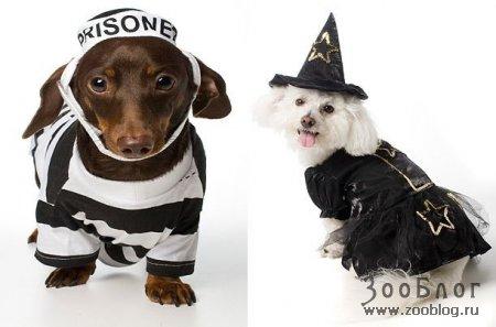 Одежда для собак (13 фото)
