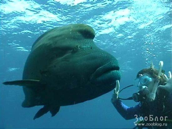 темы. рыба моей мечты.