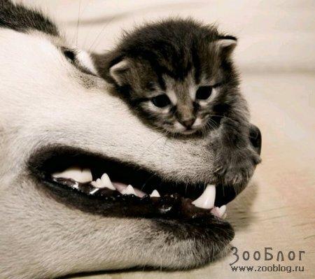 Котенок и собака - друзья