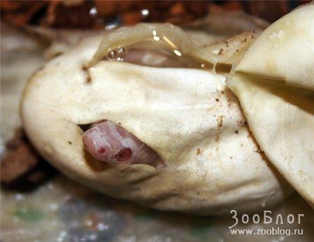 Рождение змей (7 фото)
