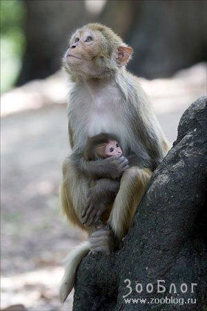 Милые обезьянки (5 фото)