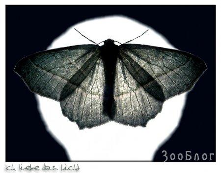 Мир насекомых. Макро (22 Фото)