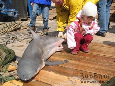 Невская акула
