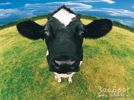 Весёлая ферма (30 фото)