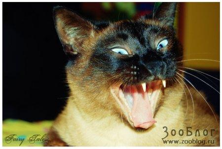 Зевнул так зевнул ;)