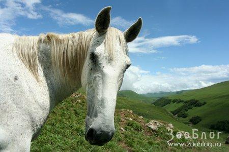Лошадь по имени