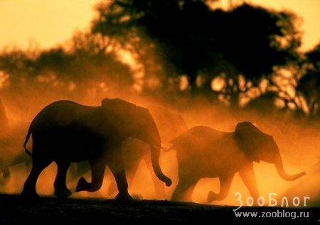Дикая природа Африки (27 Фото)