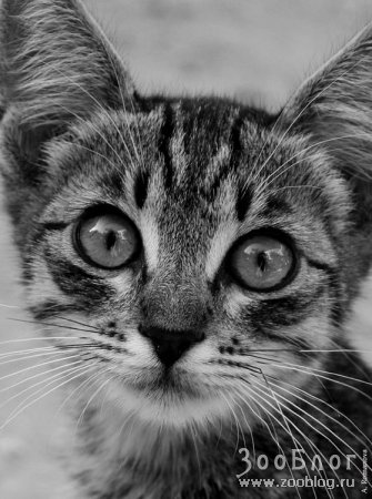 Глаза!