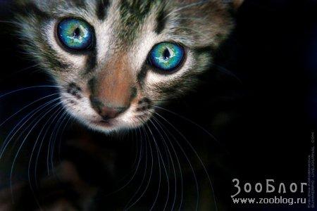 В глаза мне посмотри!