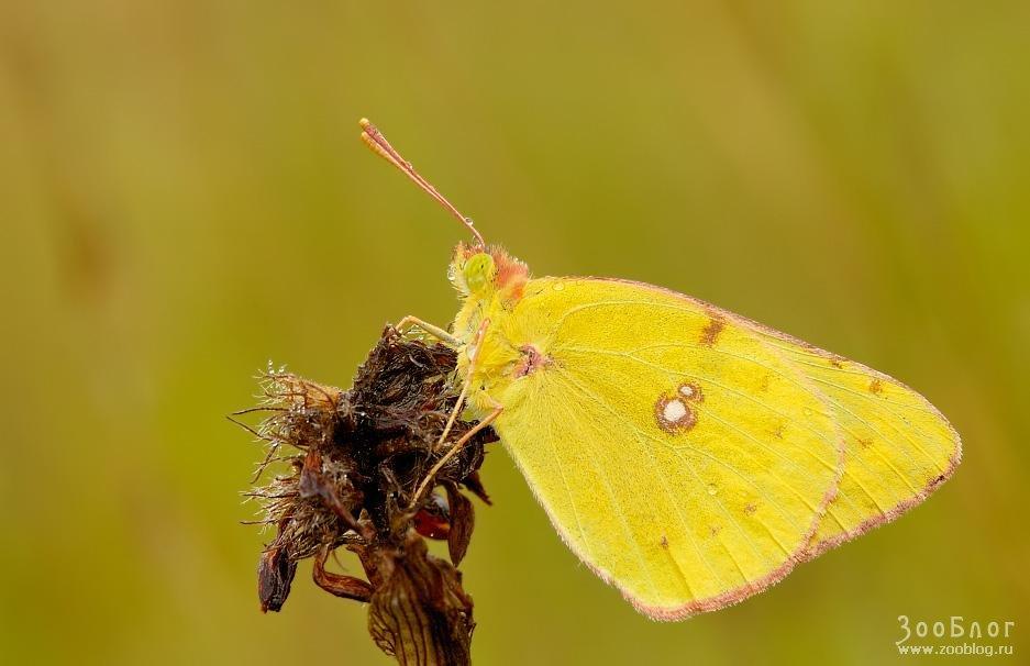 Фото макро насекомые 24 фото