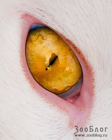 Жёлтый глаз дракона