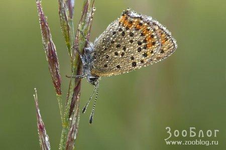 Фото МАКРО: насекомые (24 фото)