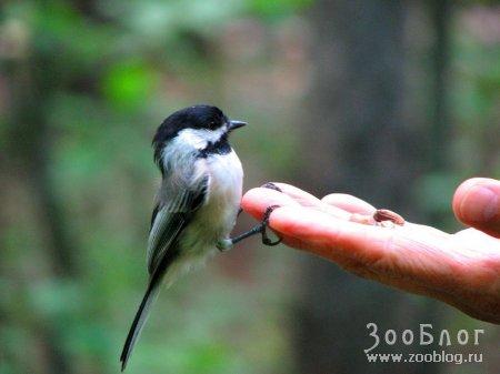 Птичка - невеличка :)