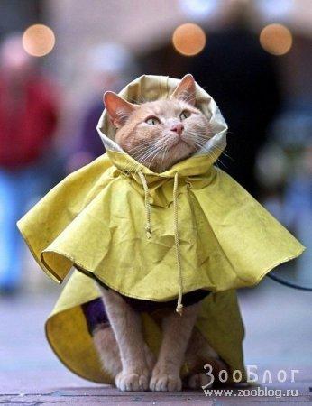 Подготовился к дождю