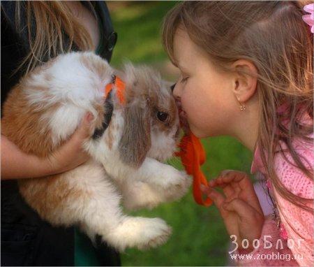 Чем пахнут кролики?