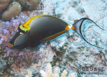 Предлагаю вашему вниманию фото некоторых обитателей рифов Красного Моря.