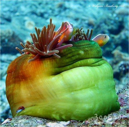 Подводная радуга