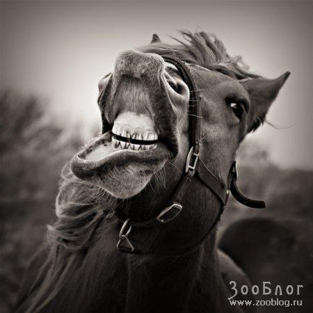 ...коню в зубы не смотрят!