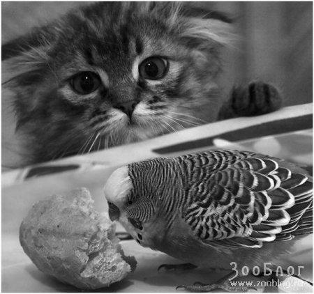 Маленький охотник