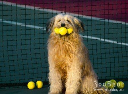 Теннисист :)