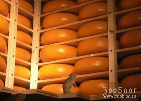 Сырный рай