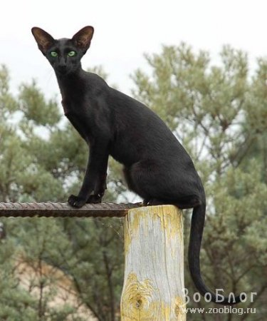 Изящный котик