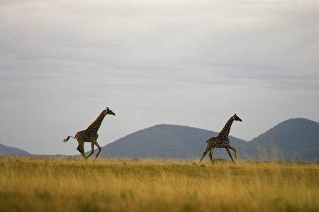 Африканская свобода