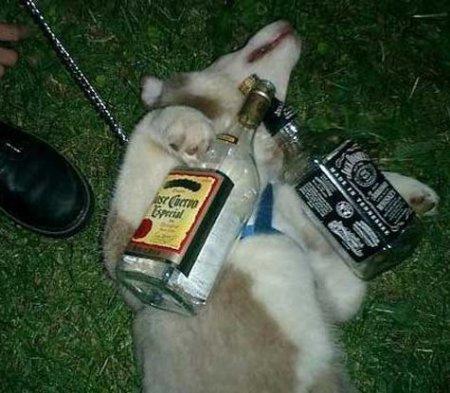 Собачий алкоголизм