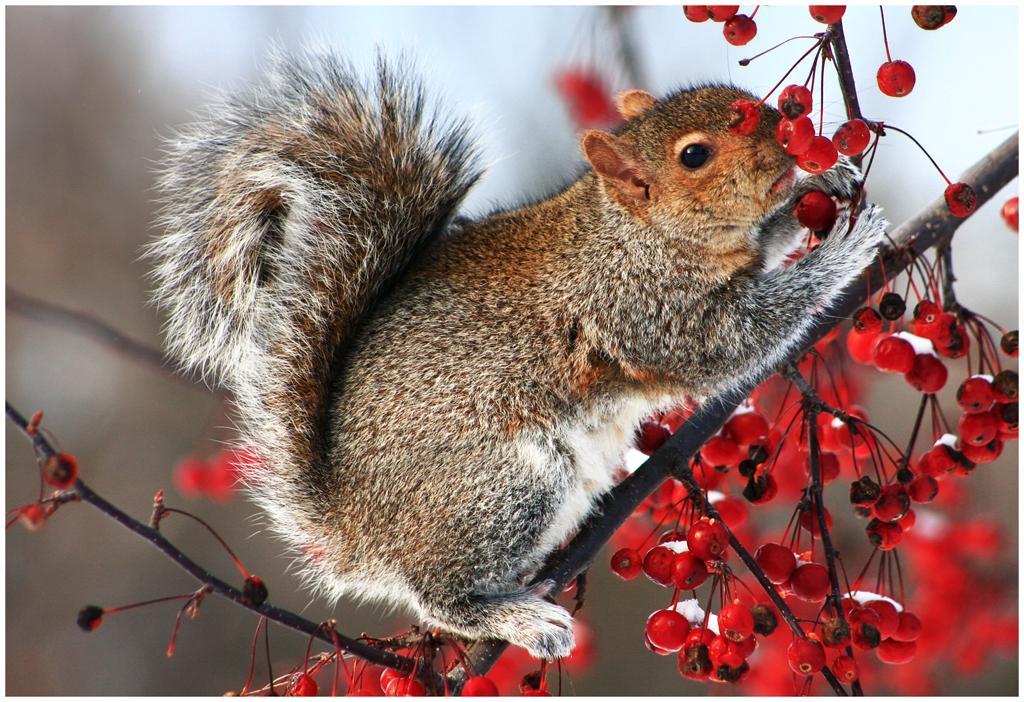 Фото рябина красная осенью