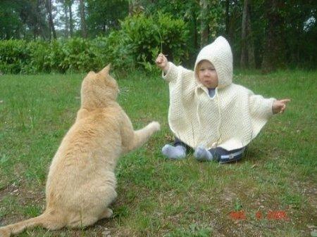 Повелитель котов