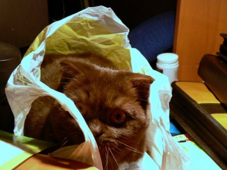 Кто в пакете?:)
