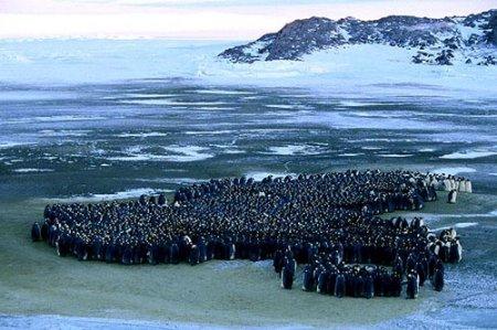 Марш пингвинов