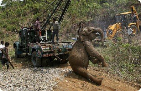 Слонёнка сбил поезд