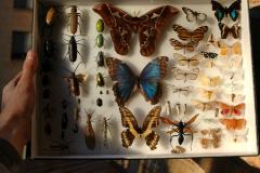 Может ли жук спасти жизнь человеку?