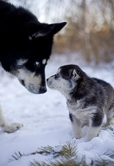 http://www.zooblog.ru/uploads/posts/2009-05/1243683374_img_2469.jpg
