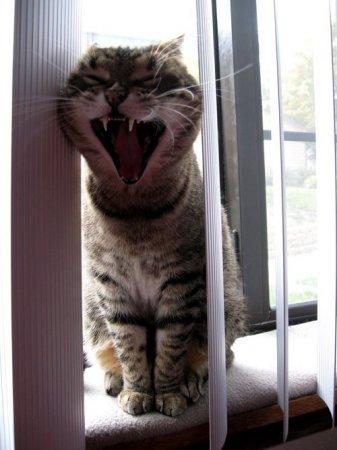Зевнул, так зевнул!