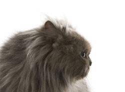 Кошка сумела выжить после 50 огнестрельных ранений